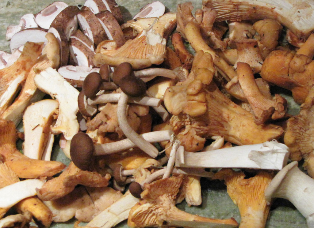 14B1 1024x745 Mushrooming Sonoma Style