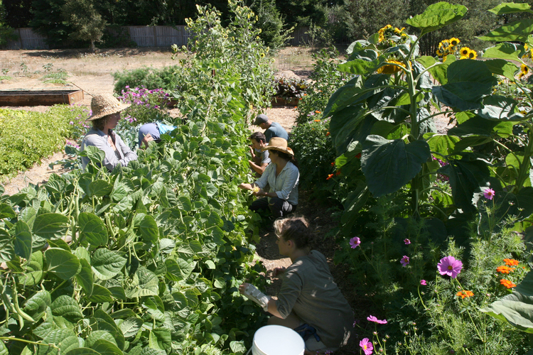 Ceres Community Project-Giving Back Sonoma Style™-Local organic gardens planted, maintained and harvested by Ceres teens-image via Revive and Thrive Project