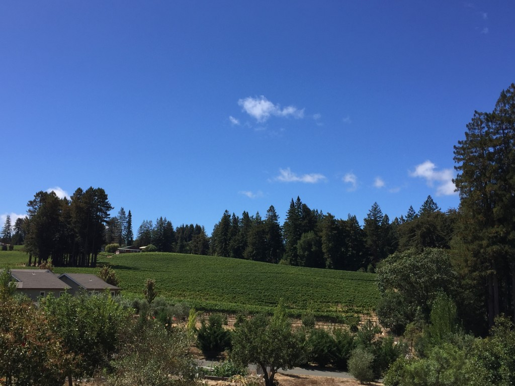 Picture Perfect Day Apple Harvest-Entertaining Sonoma Style™